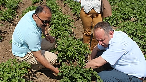 İl Müdürü Özkan Yolcu Patates Tarlalarını İnceledi