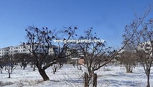 Karla Kaplı Alanlarda Kargalar Yiyecek Derdinde